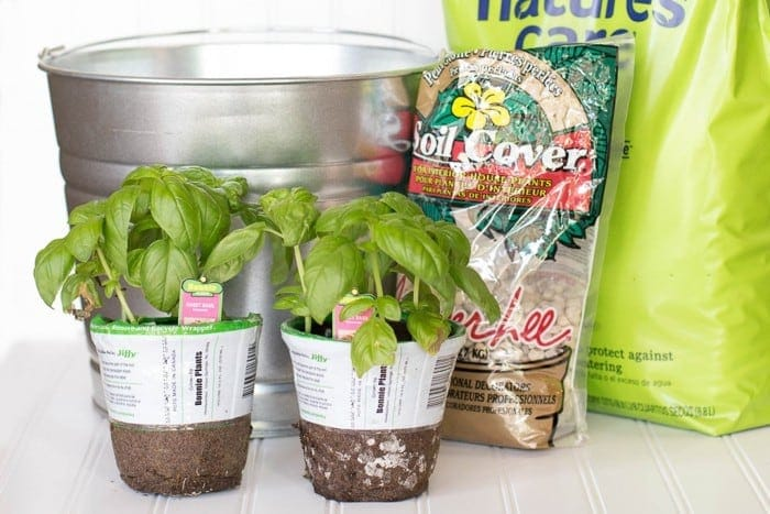 Easy DIY bucket herb garden. Stylish, practical, and portable!